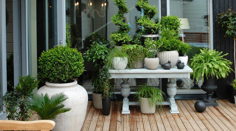 Valtti Terrace oil - Атмосферостойкое колеруемое масло для террас и садовой мебели